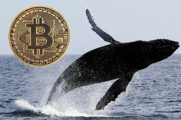 Bitcoin, Ethereum, and Ripple crash lower after expert warns of crypto implosion